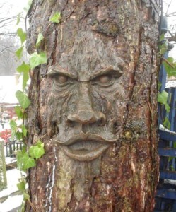 Tree Face Plaque Staring